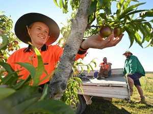 Thousands of Queensland jobs no one wants