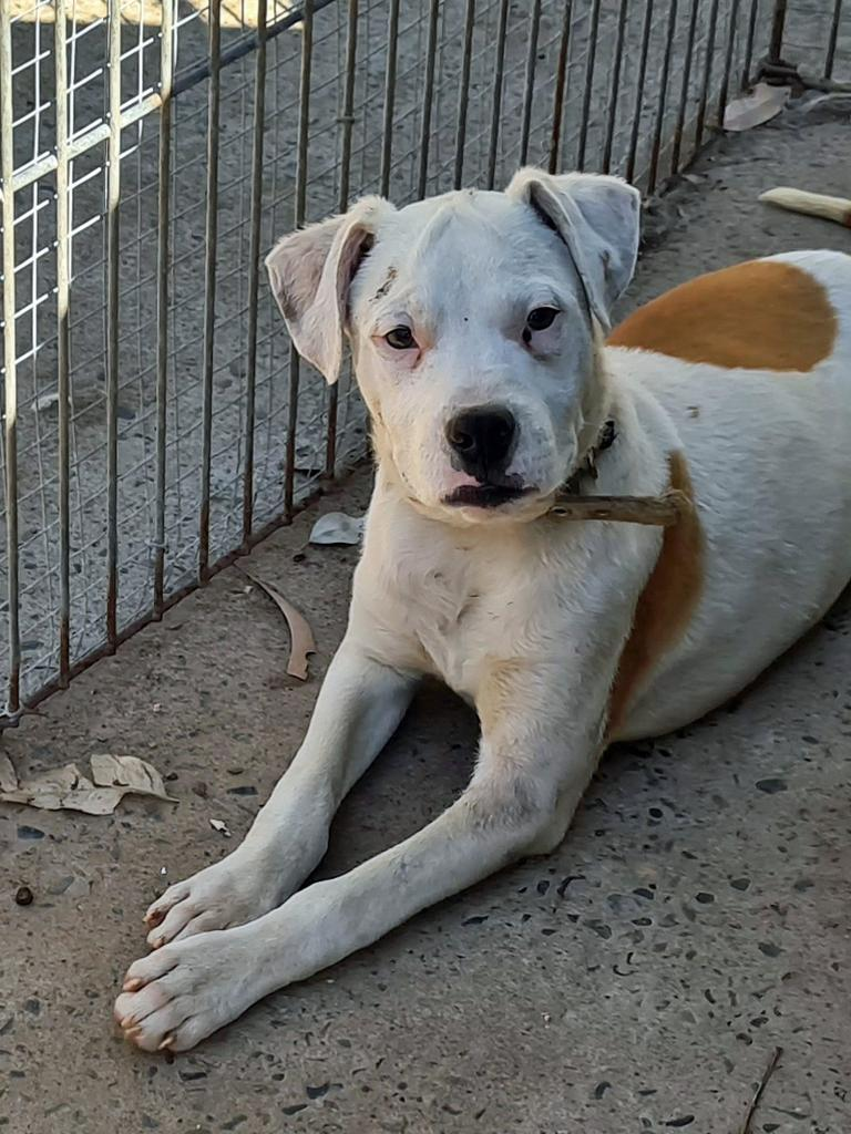 Dillon is up for adoption at Happy Paws Haven now.