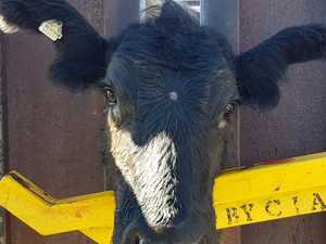 Casino farmer's 'significant' plan to steal cattle backfires