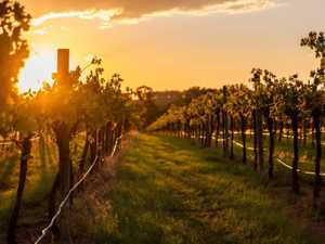 The 8 best wineries on Gympie's western doorstep