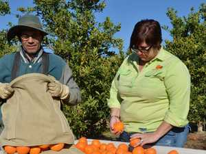 'Disgraceful' rules to blame for crop waste, worker shortage