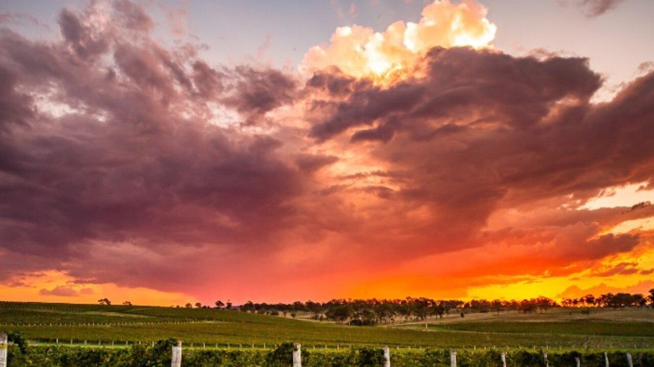 Clovely Estate Vineyard