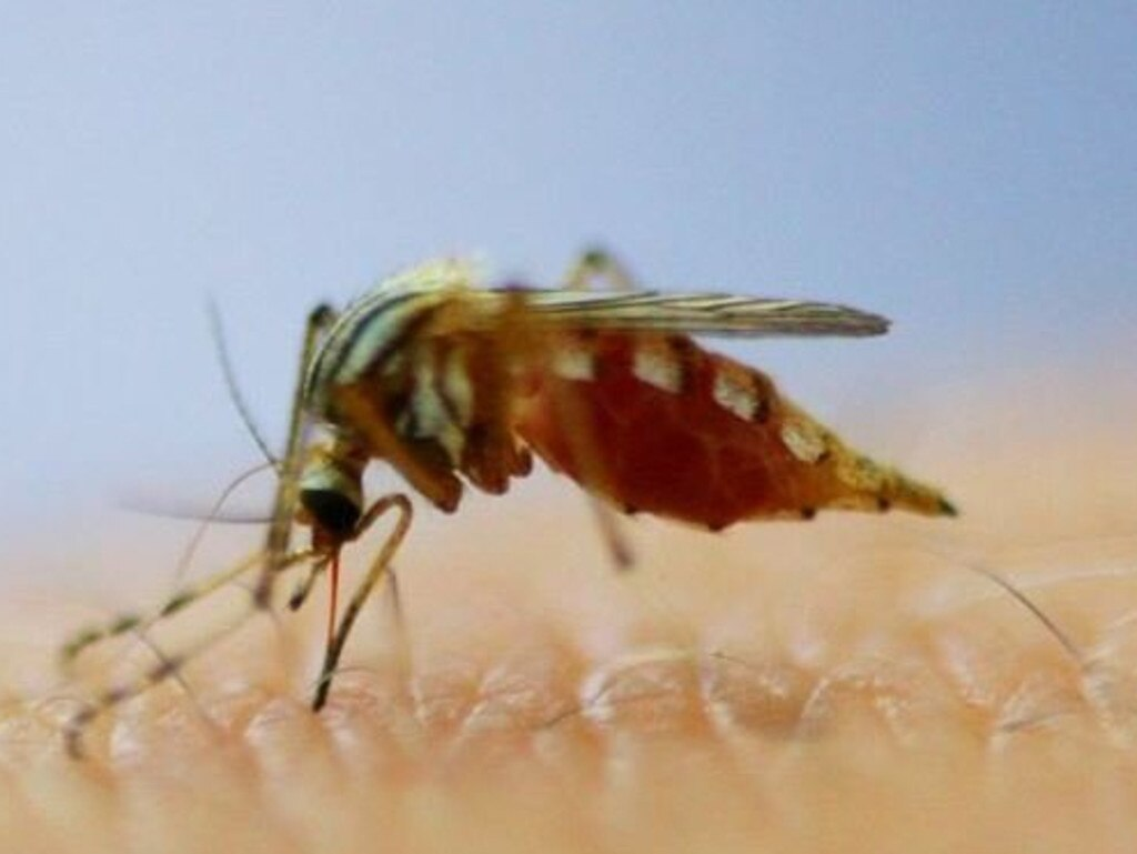 More than 600 Sunshine Coast residents have been infected with mosquito-borne viruses this year, prompting a health concerns leading into the wet season