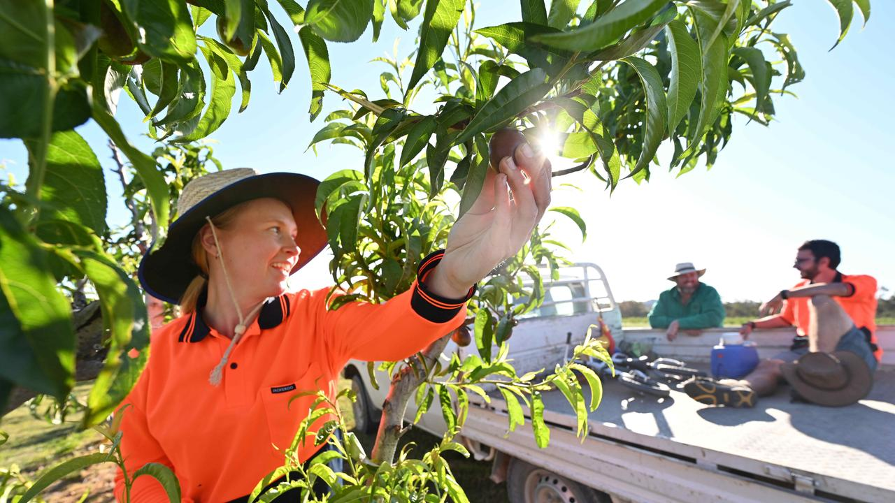 Bowen Gumlu Growers Association president Carl Walker said there were plenty of picking jobs in the region for those looking for work. Picture: Lyndon Mechielsen
