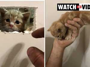 Kitten stuck in the wall rescued by firefighter