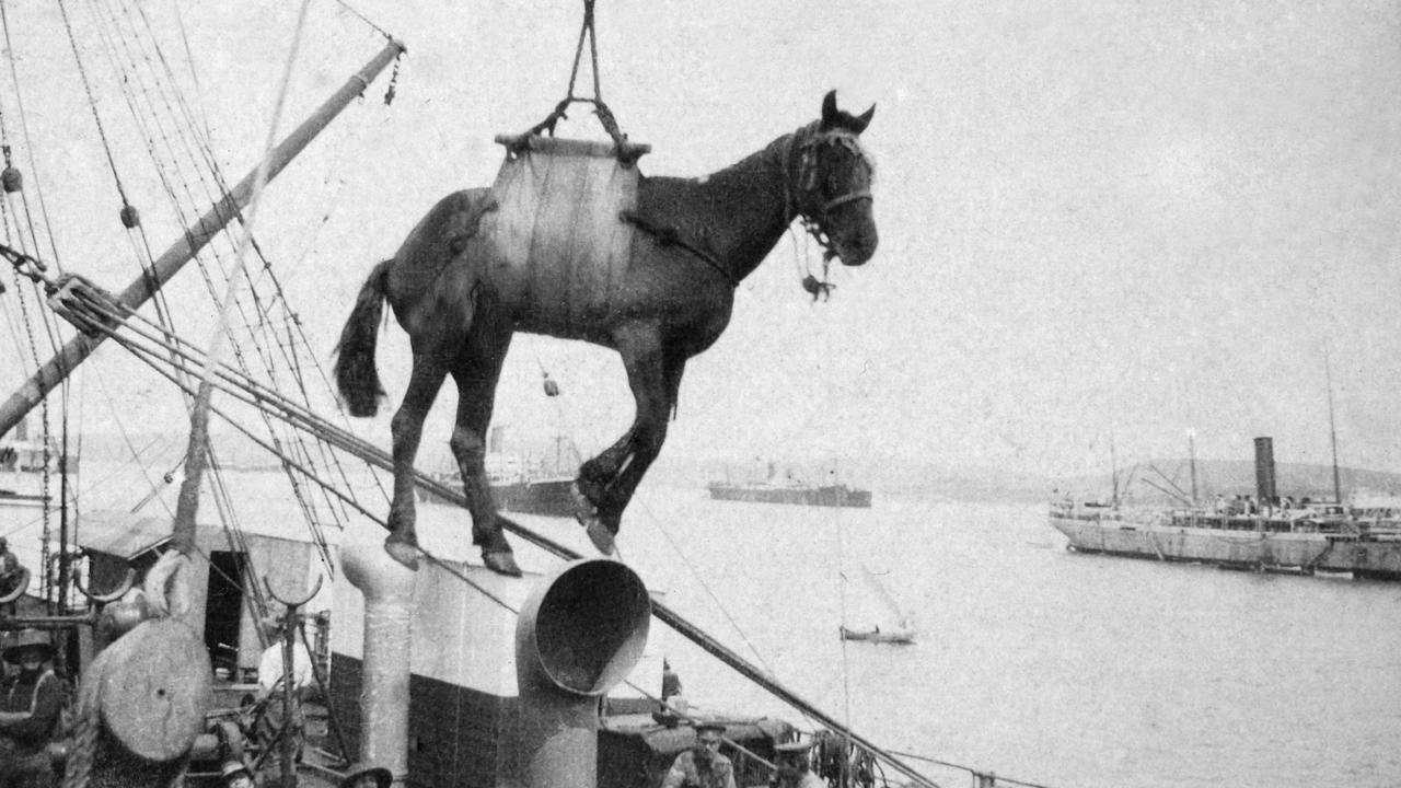 A horse is loaded onto a troop transport ship in 1915. Picture: Australian War Memorial