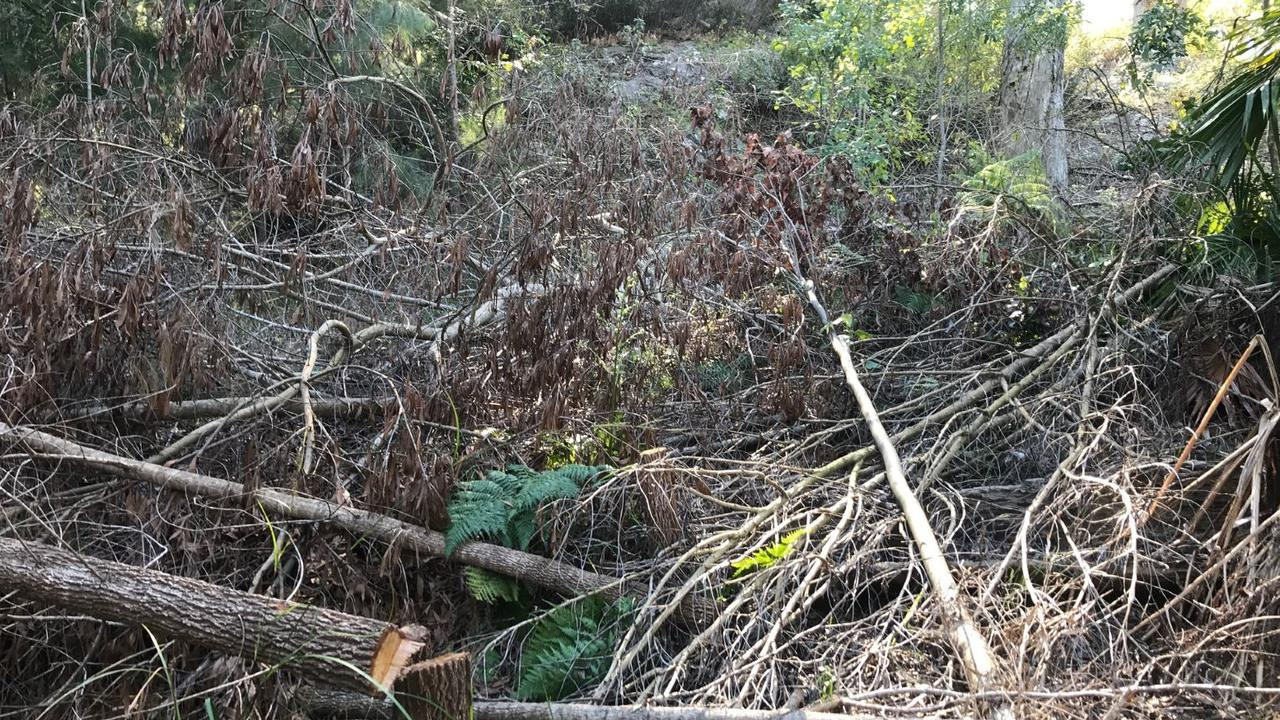 An example of illegal tree clearing on the Sunshine Coast.