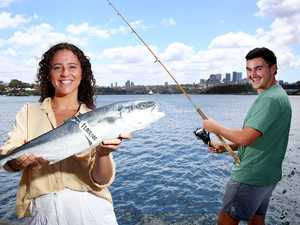 $1 million on the line in Sydney Harbour fish hunt
