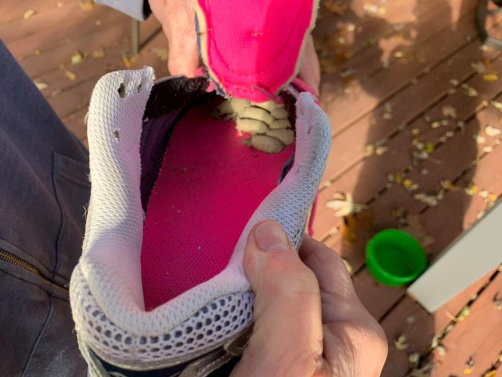 Another woman discovered the same nests in her gardening shoes. Picture: Facebook