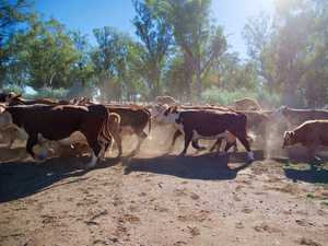 Qld beef producer latest on China's hit list