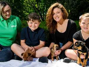 Dumped puppies reunited with rescuers