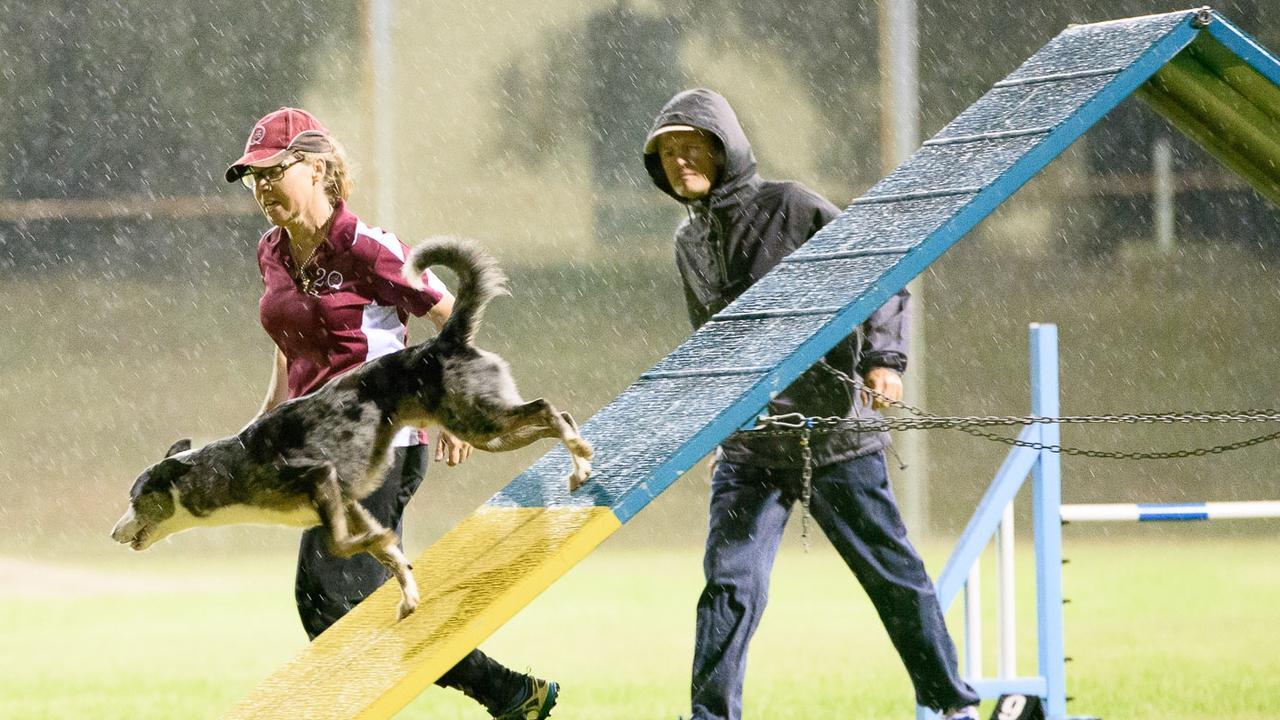 Dog handlers and their pets display their training skills in all conditions at the Tivoli Sporting Complex. Agility Dog Club of Queensland officials and members are celebrating two Ipswich Sports Awards.