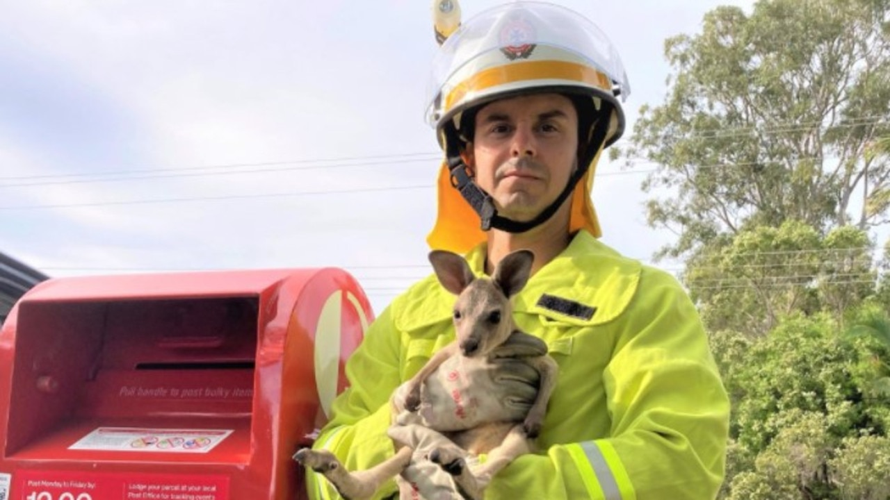 The RSPCA in investigating after a tiny baby kangaroo had to rescued after being shoved into a post box.
