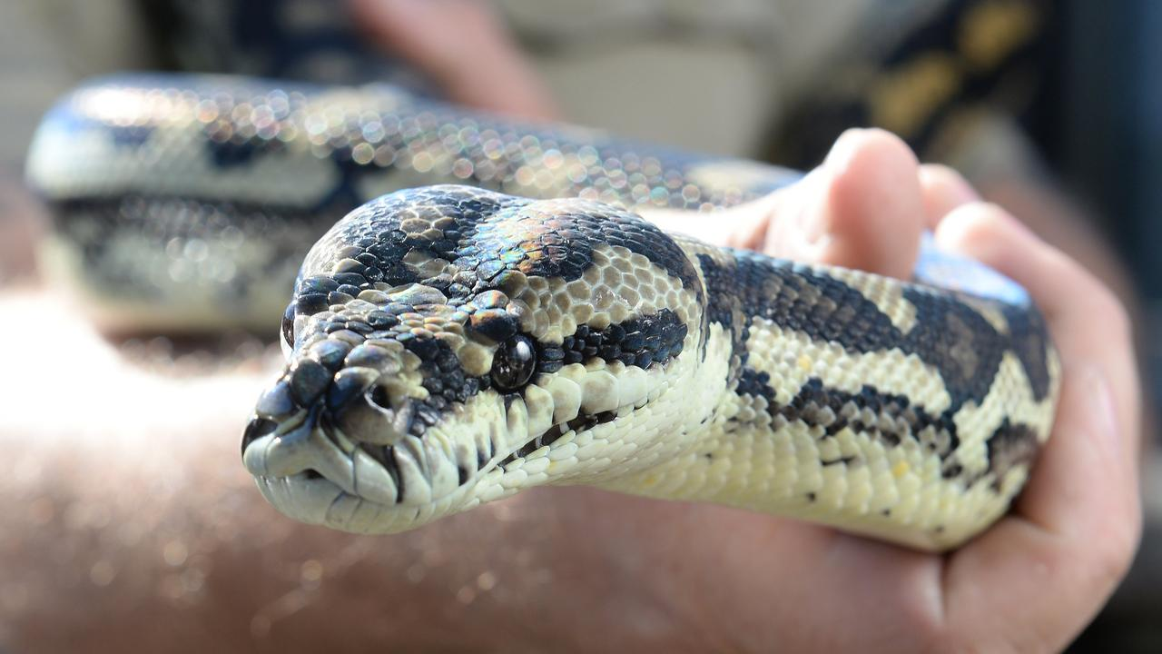 SNAKE BITE: A local has reportedly been bitten by a snake.