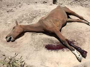 GRAPHIC: Couple slammed for animal mistreatment