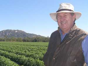 Little helpers: Bowen's driving force in beneficial insects