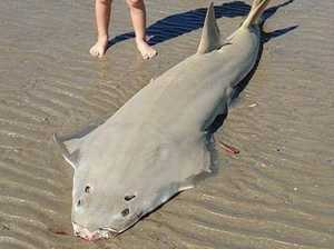 Group slams 'barbaric' laws after shark mutilation