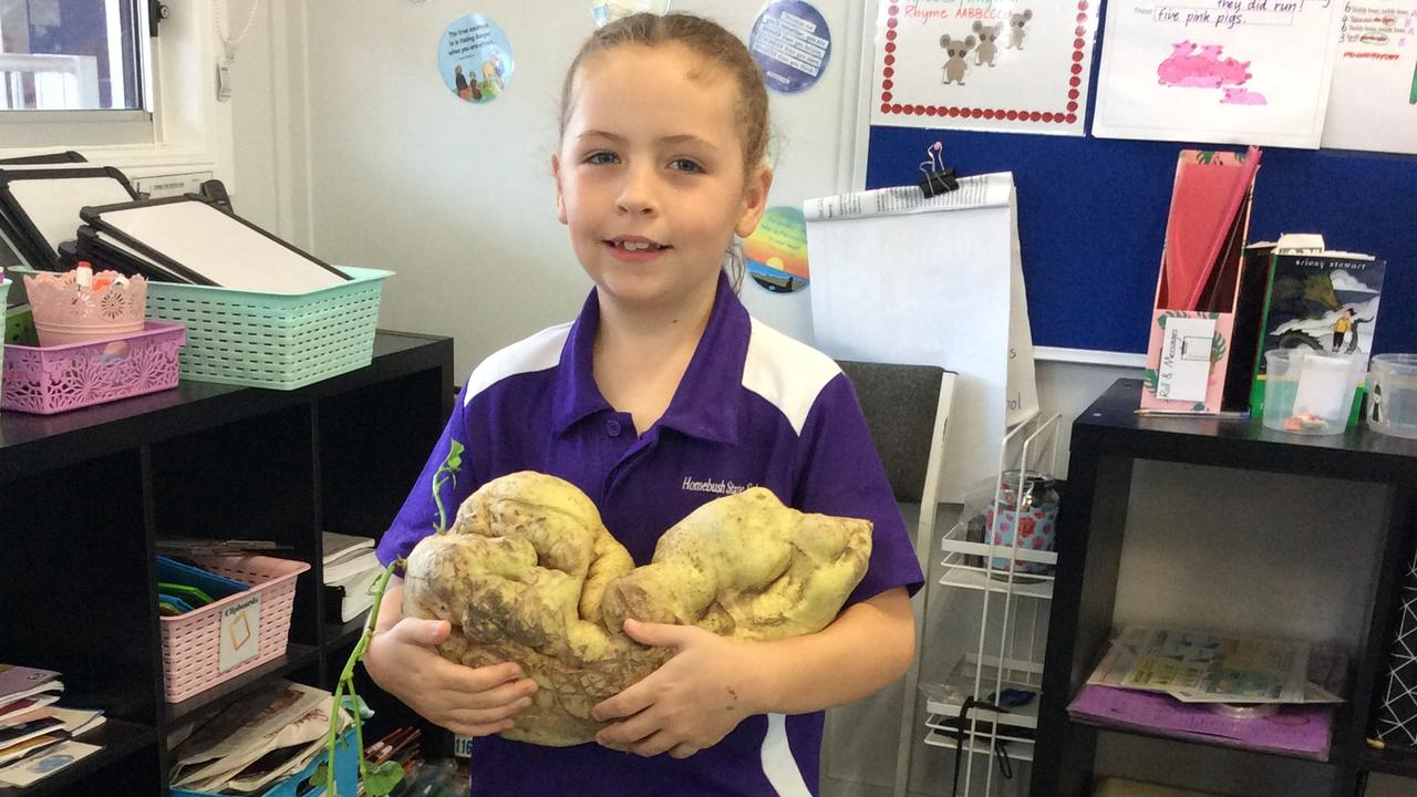 Homebush State School student Kyah Coles with her sweet discovery – a whopping 4.5kg potato grown in her garden at home.