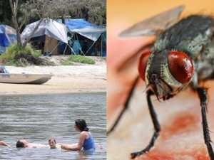 Flies, stench and disease plague Inskip Point