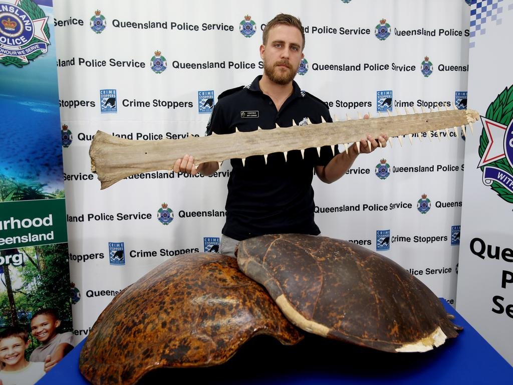 Constable Matt Cornish with two sea turtle shells and a sawfish rostrum seized during a drug bust at a Queensland residence in 2019. Picture: Stewart McLean.