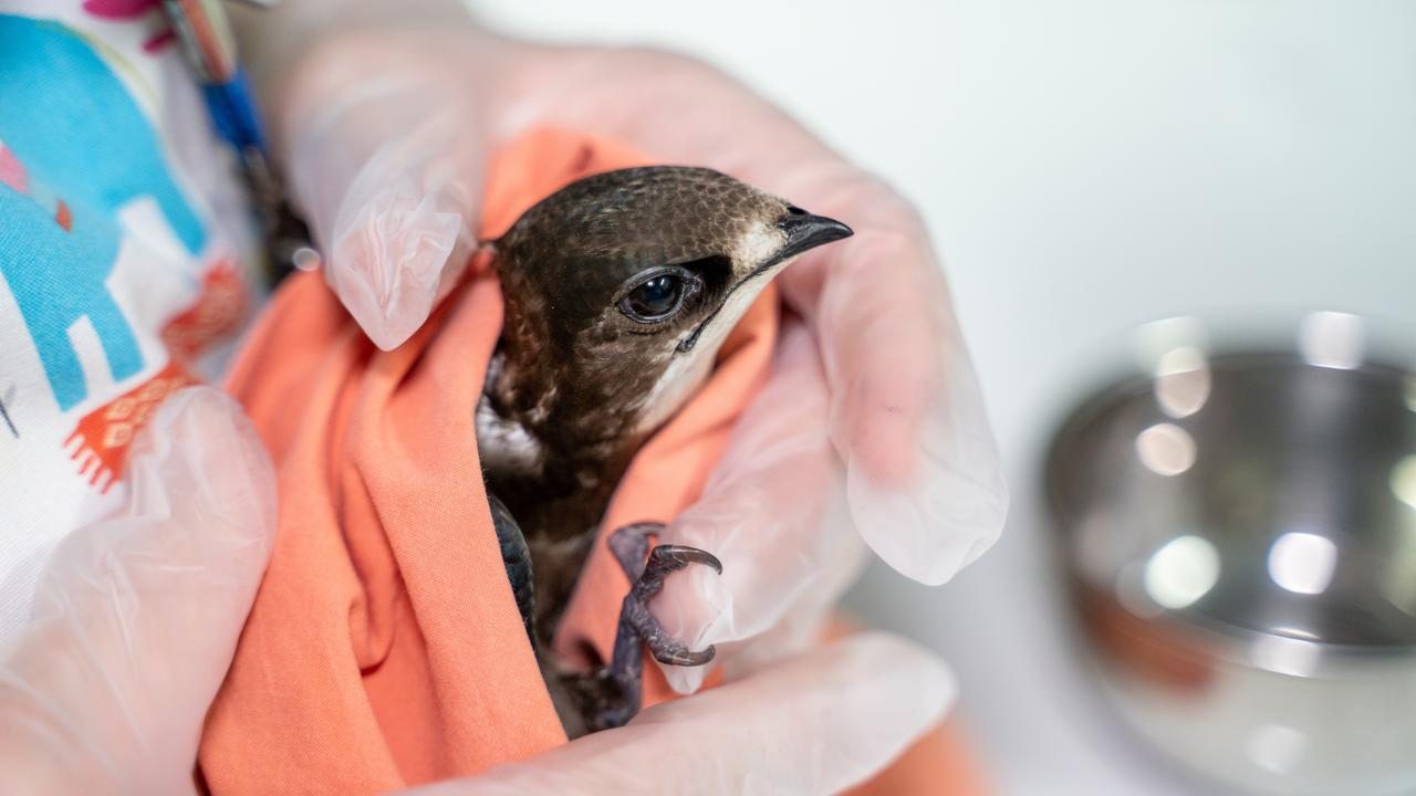 At present, 474 wildlife animals are in care at RSPCA hospitals across the state.