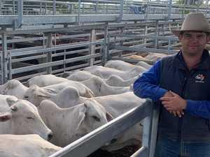 Cattle sales at CQLX continue to break records