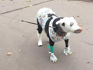 Hero dog resuces four patients from hospice fire