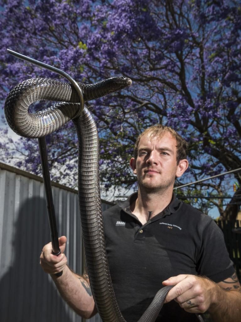 Anthony Adams of Anthony's Snake Relocating is warning residents to stay away from snakes found in Toowoomba suburban back yards. Picture: Kevin Farmer.