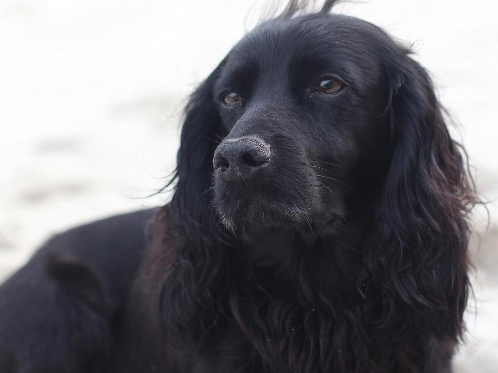William and Kate's dog Lupo.