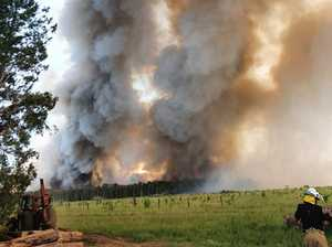 Bird-brained mistake sparks massive bushfire
