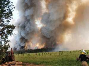 Bird-brained mistake sparks massive bushfire