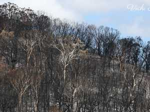 Fears for wildlife population as island continues to burn