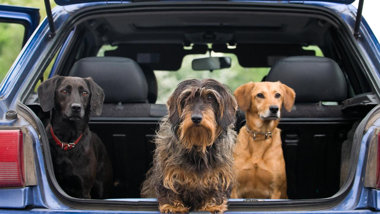Maraboon Veterinary Surgery is raising awareness of a viral outbreak causing contagious cough in dogs in the Central Highlands. Photo: iStock