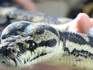 Hiss time to keep your eyes peeled and stay snake safe