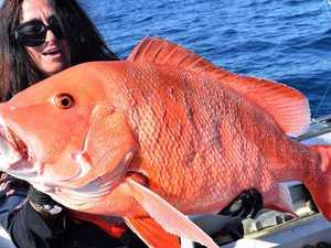 Record-breaking start to Rainbow Beach fishing comp