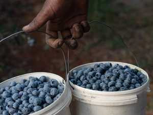 Berry and citrus farms most at risk, slavery report reveals