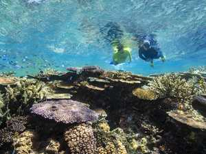 How La Nina will affect reefs around the Whitsundays