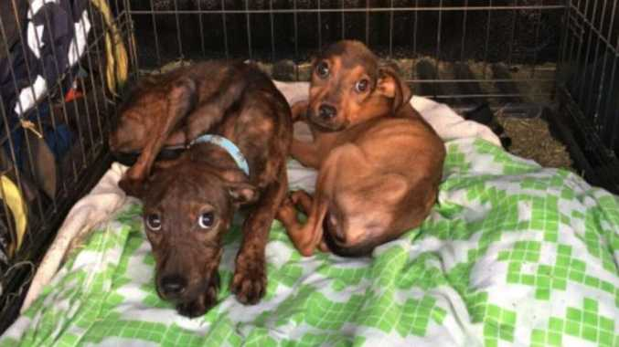 Neglected puppies found emaciated, in the sun