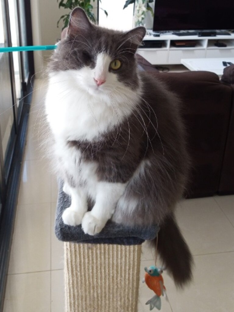 Two years after a video went viral depicting awful animal cruelty in Ipswich, Sebastian (aka Marcello) is happy and thriving in his forever home.