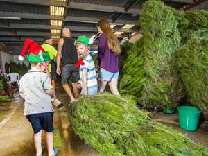 Operation festive: Inside our real Xmas tree industry
