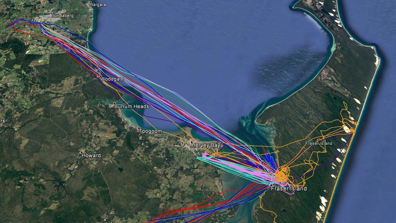 HELP FROM ABOVE: Maps tracking the firefighting aircraft working on the K'gari (Fraser Island) fire over the past couple of days.
