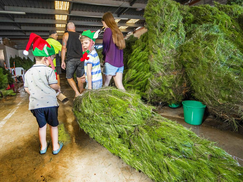 Ben, 3, and Harry, 6, Turner from Burleigh Heads ready to take home their new Christmas tree. Picture: Nigel Hallett