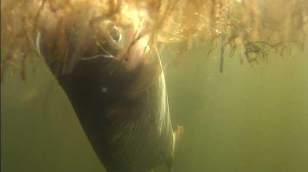 FISH KILL: Native fish suffocate in Mackay waterway