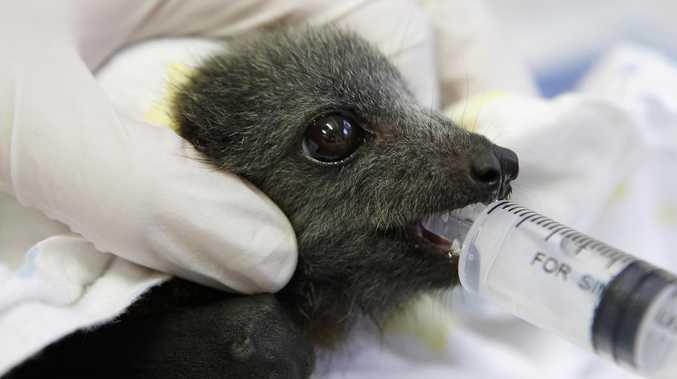 If it's a bat, do not pat, call a vet and that's that