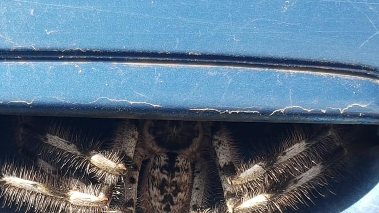 A woman was shocked to find a huge spider had taken up residence under the door handle. Picture: Facebook