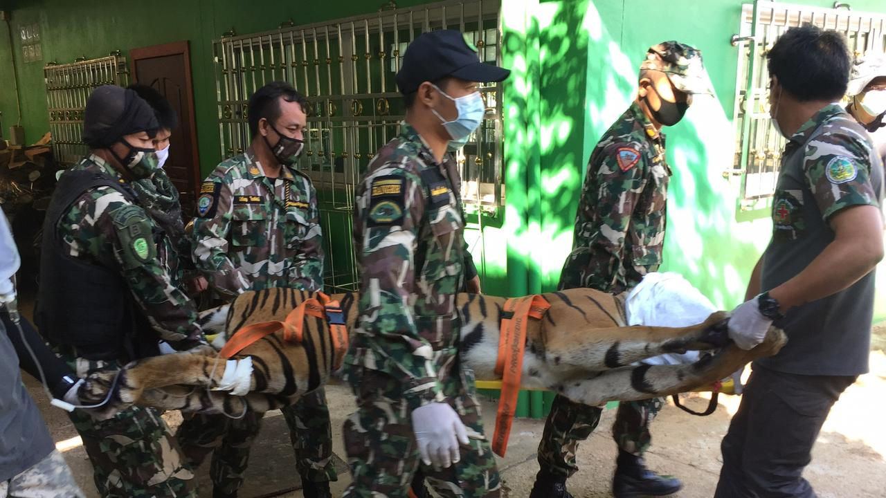 Authorities have seized a beheaded tiger, along with other dismembered animal corpses, during a raid at a private Thai zoo WARNING: GRAPHIC.