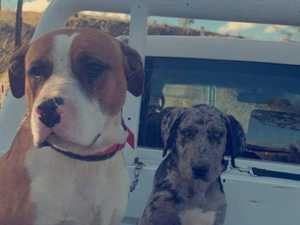 Outrage after dogs killed metres from rescue