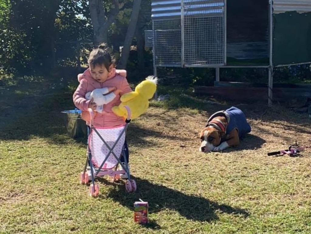 Alyrah and Tank, both 2, grew up together and were best mates. Picture: Aleasha West Alexander
