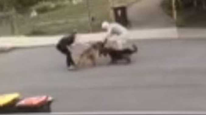 'Extremely traumatised': Harrowing dog attack caught on CCTV