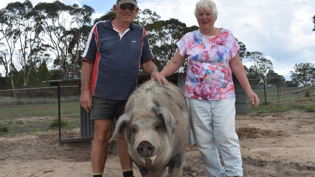 HAPPY RETIREMENT: Happy Pig Farm owners Paul and Gail Gillis and pig Freckles.